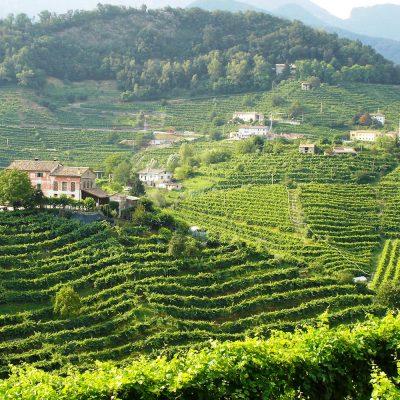 Prosecco-hills-Conegliano